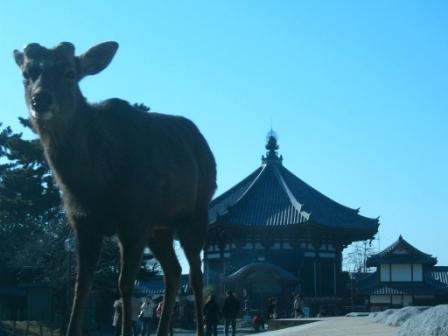 興福寺の鹿.JPG