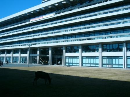 県庁の鹿.JPG